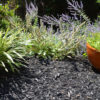 black mulch around plants