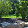 brown mulch in landscaping